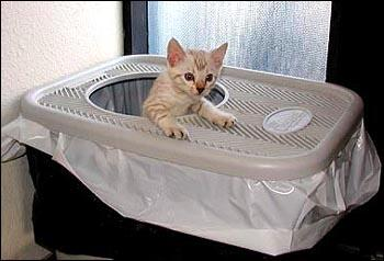 Clevercat Top Entry Litter Box Must Read Review