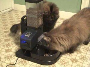 cat using the CSF-3 feeder