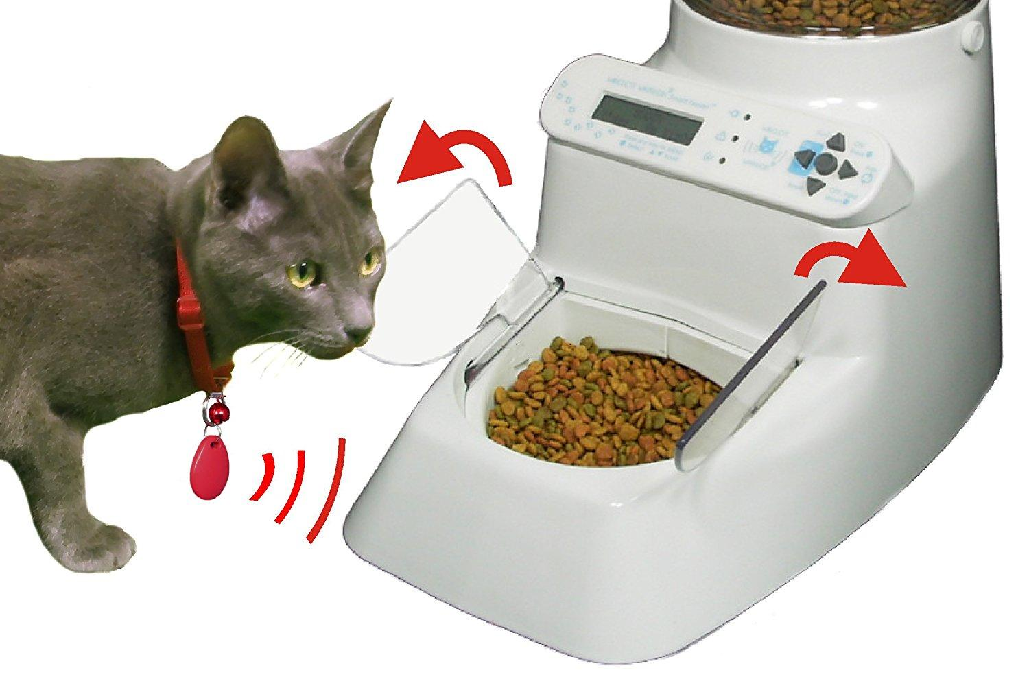 Where To Feed Cat Away From Dog