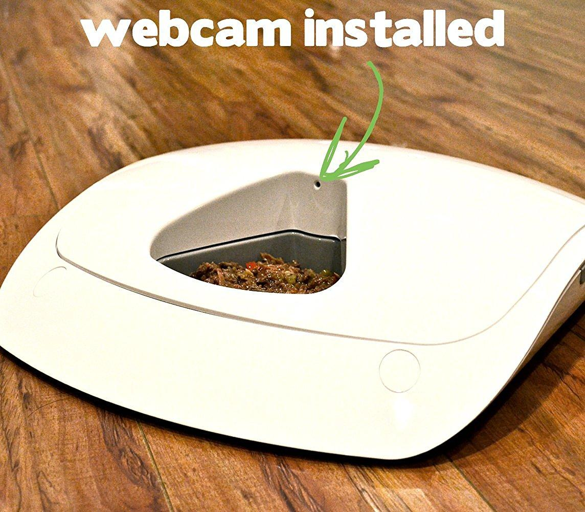 The Best Automatic Cat Feeder Dispenser Reviews for Wet and Dry Food