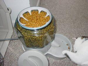 view from the top of the Ergo Auto Pet Feeder Review