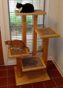cats in their cat tree