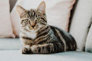 What You Should Know About Cat Pregnancy