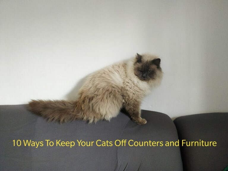 Top 10 Ways To Stop Cats From Jumping On Counters and Furniture