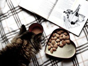 Cat Food For Kidney Disease