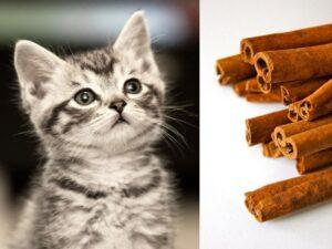 Is Cinnamon Bad For Cats