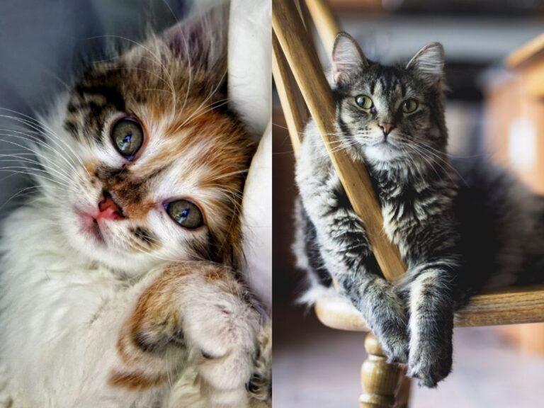 Kitten Food vs Cat Food