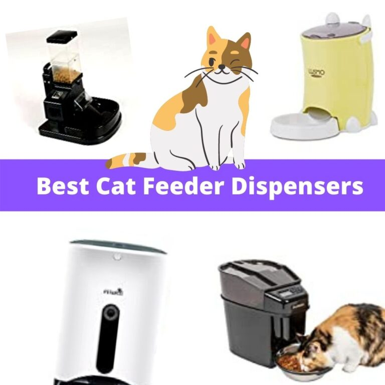 best automatic cat feeder dispenser