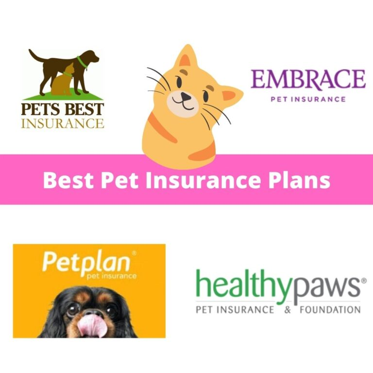 best pet insurance policy plans