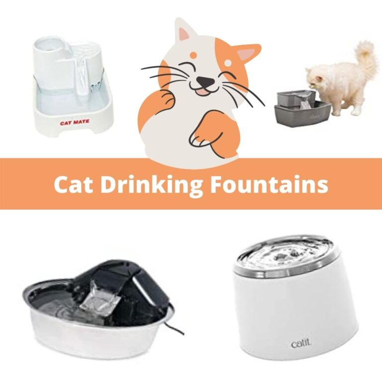pet drinking fountain