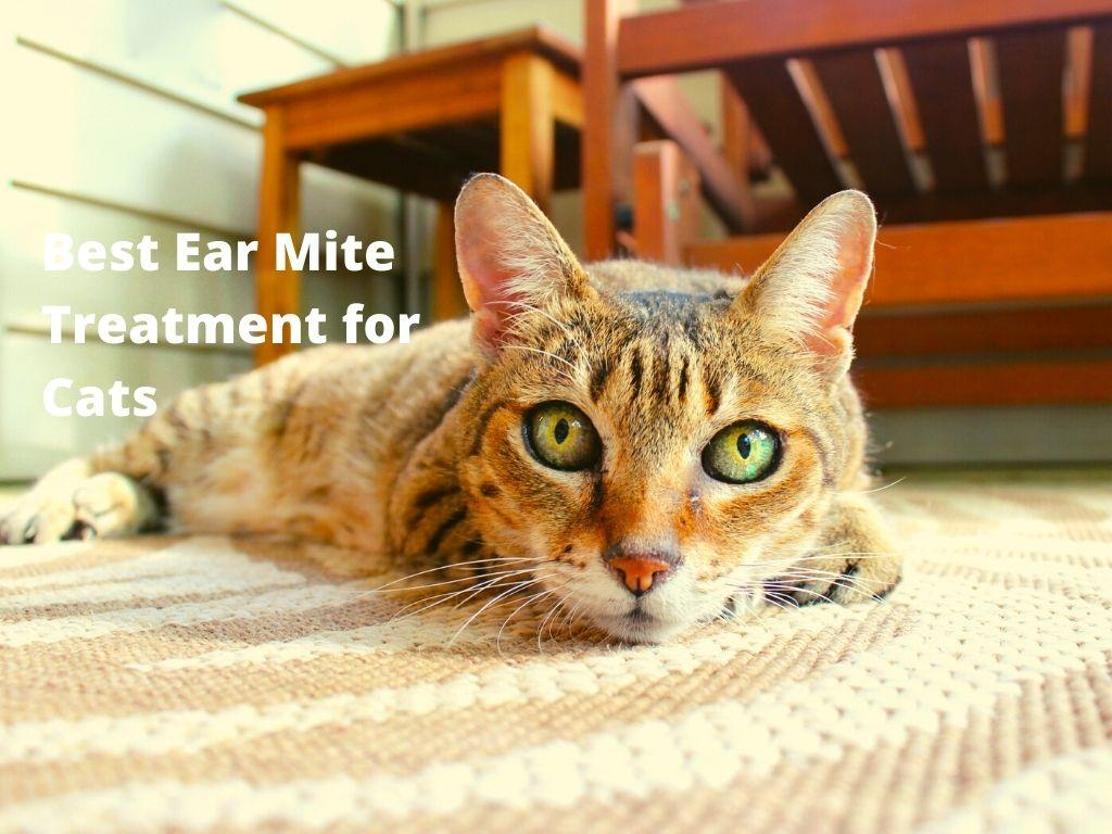 Best Ear Mite Treatment for Cats
