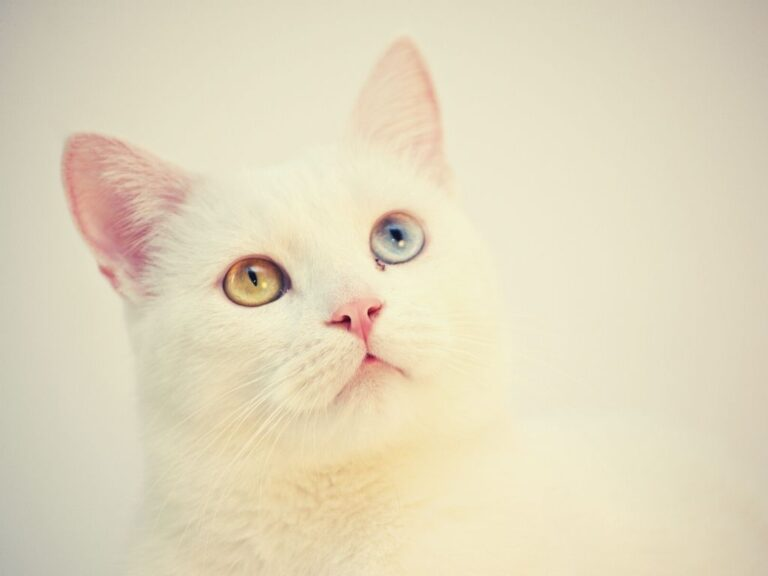 Best Hairball Remedy For Cats