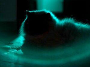 Flea Medicine For Cats