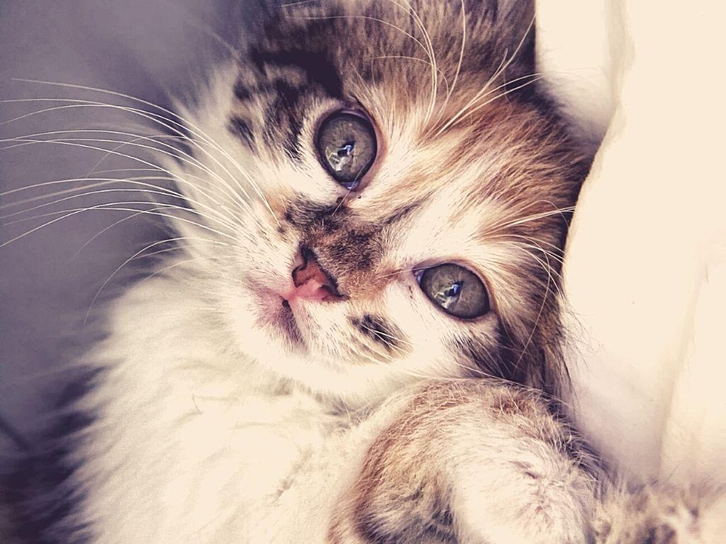 Is Catnip bad for kittens