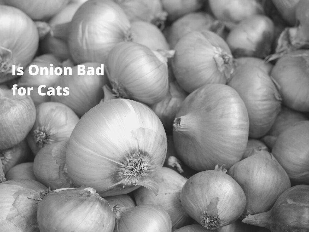 Is Onion Bad for Cats