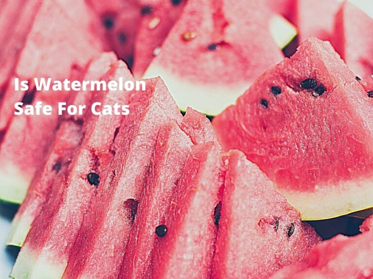 Is Watermelon Safe For Cats