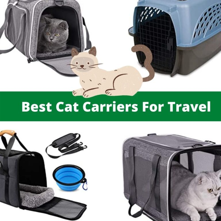 Top Loading Cat Carriers