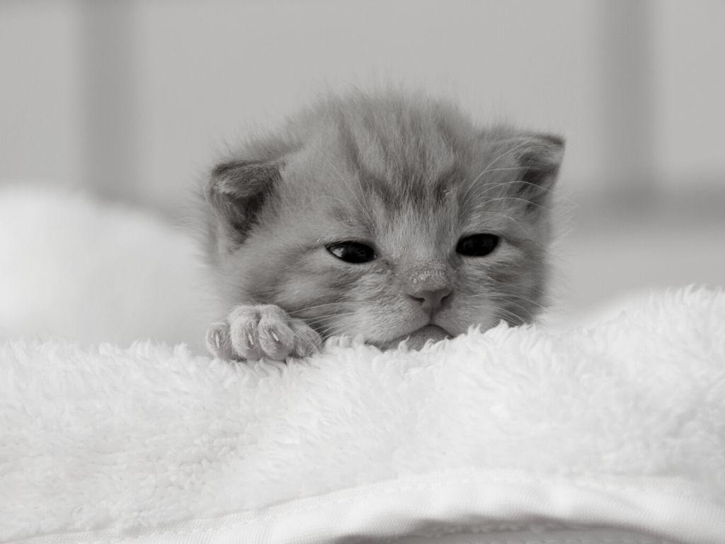 What age are kittens weaned