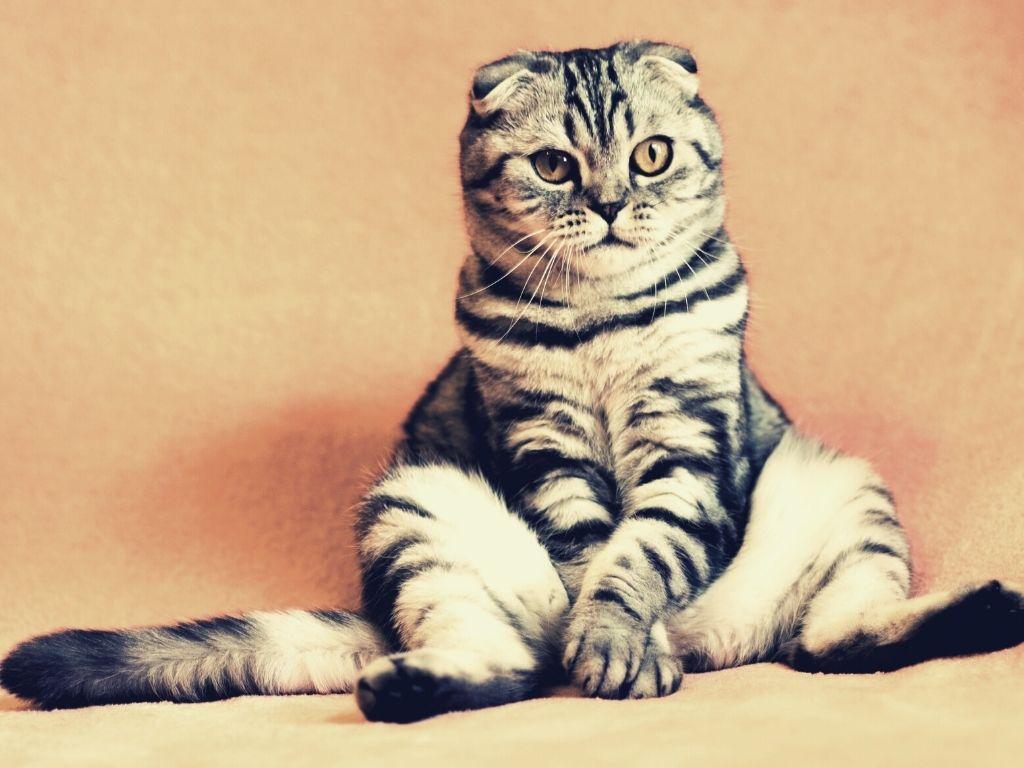 constipated cat relief medicine