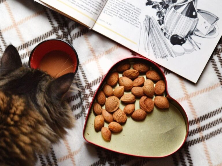 is dry cat food bad for health kibbles