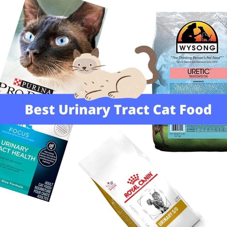 Best Urinary Cat Food