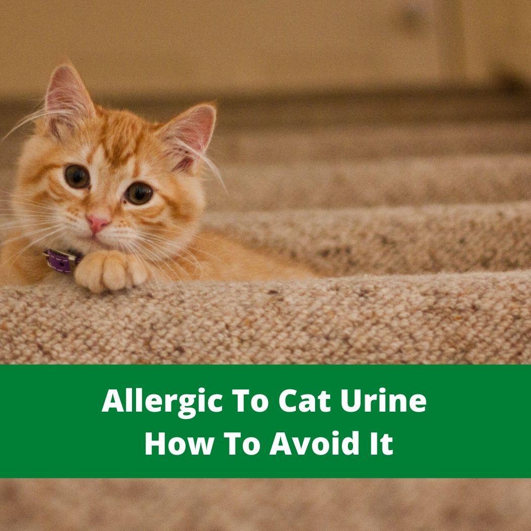 Allergic To Cat Urine