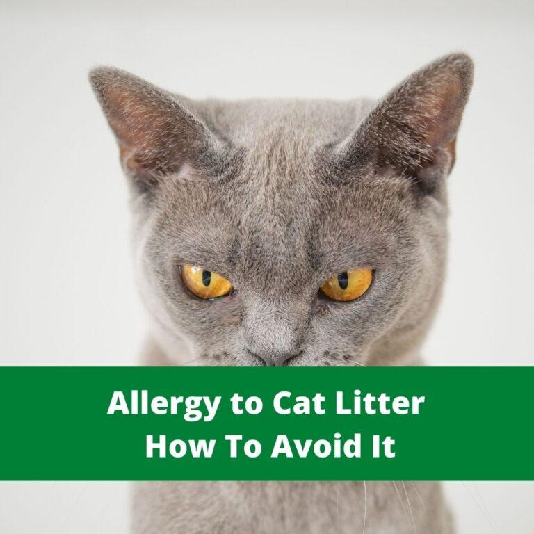Allergy to Cat Litter