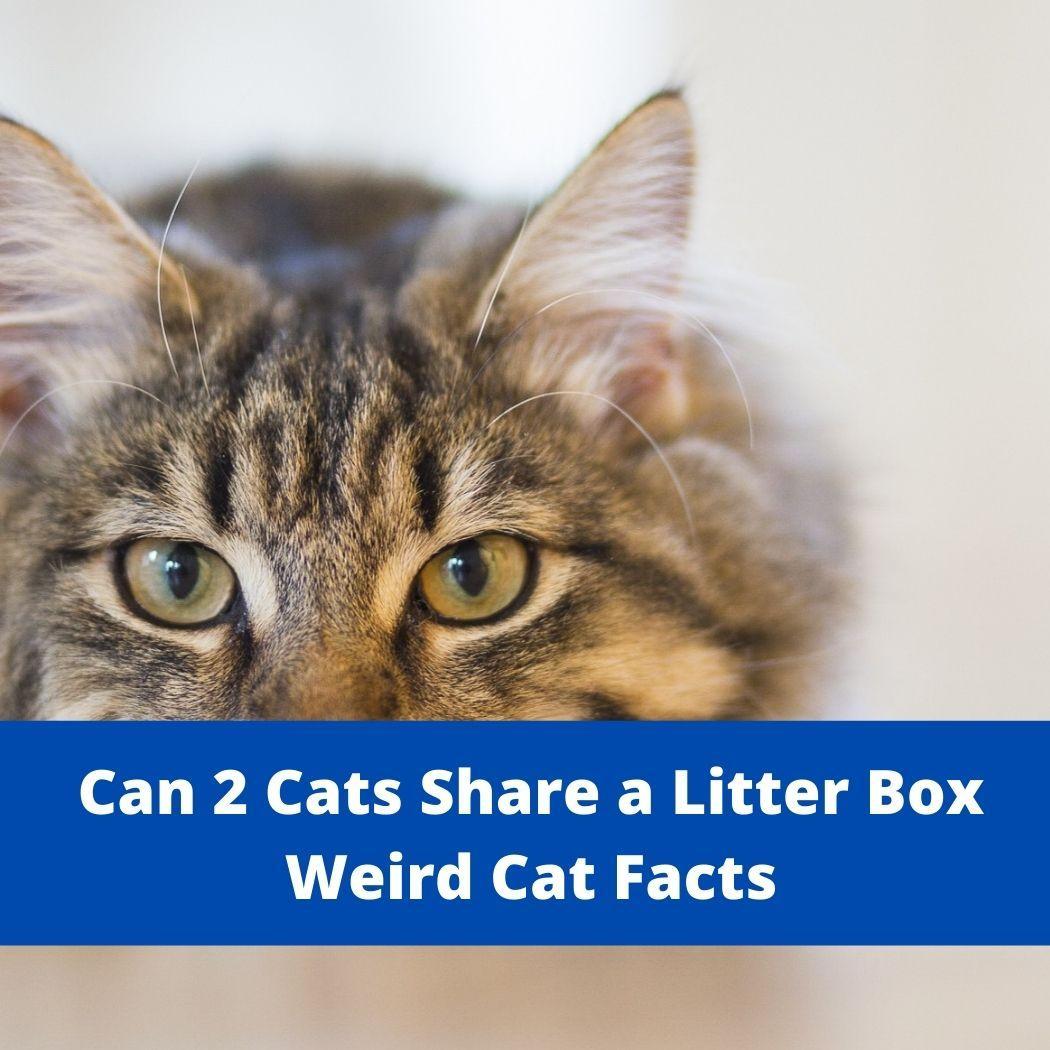 Can 2 Cats Share a Litter Box