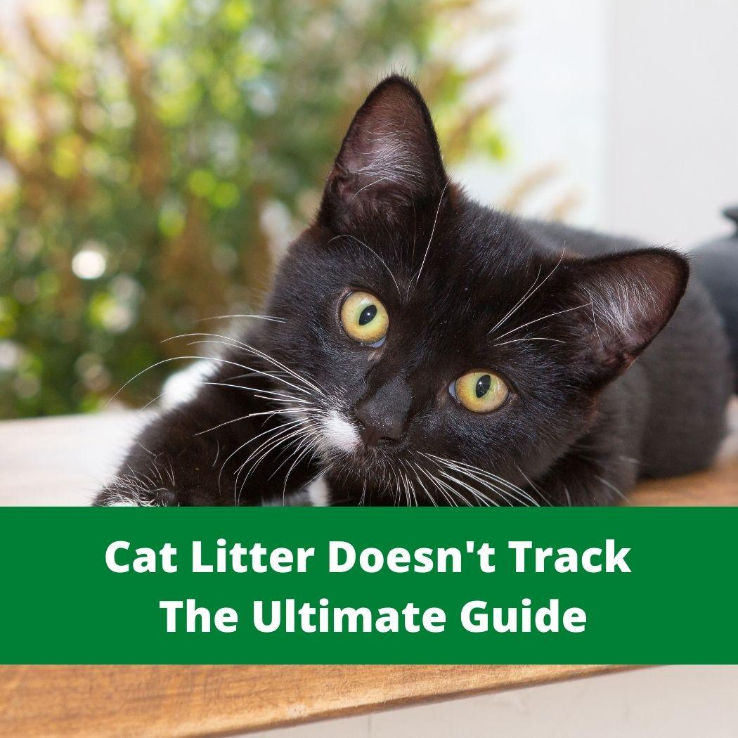 Cat Litter Doesn't Track