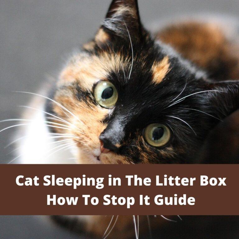 Cat Sleeping in The Litter box