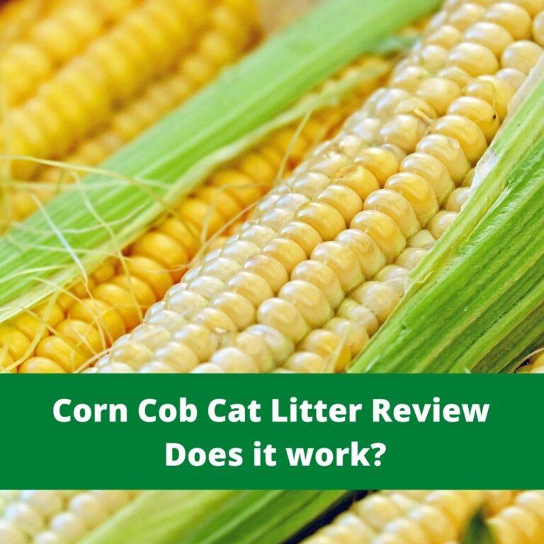 Corn Cob Cat Litter Review