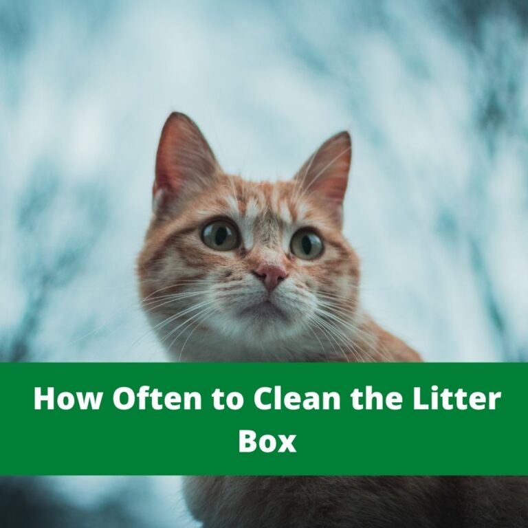 How Often to Clean the Litter Box