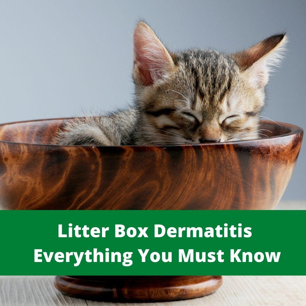 Litter Box Dermatitis