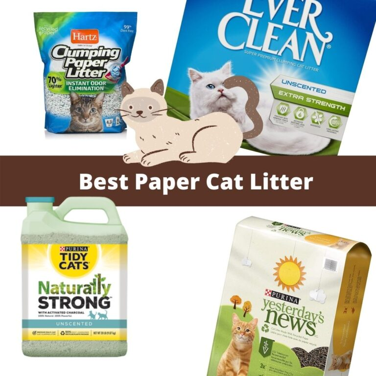 Paper Cat Litter review