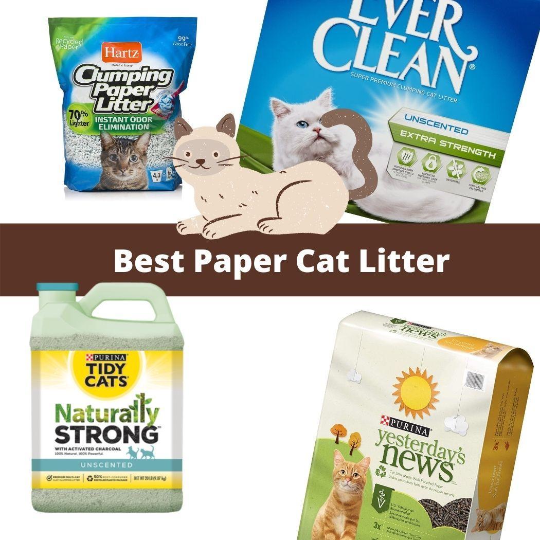 Paper Cat Litter review