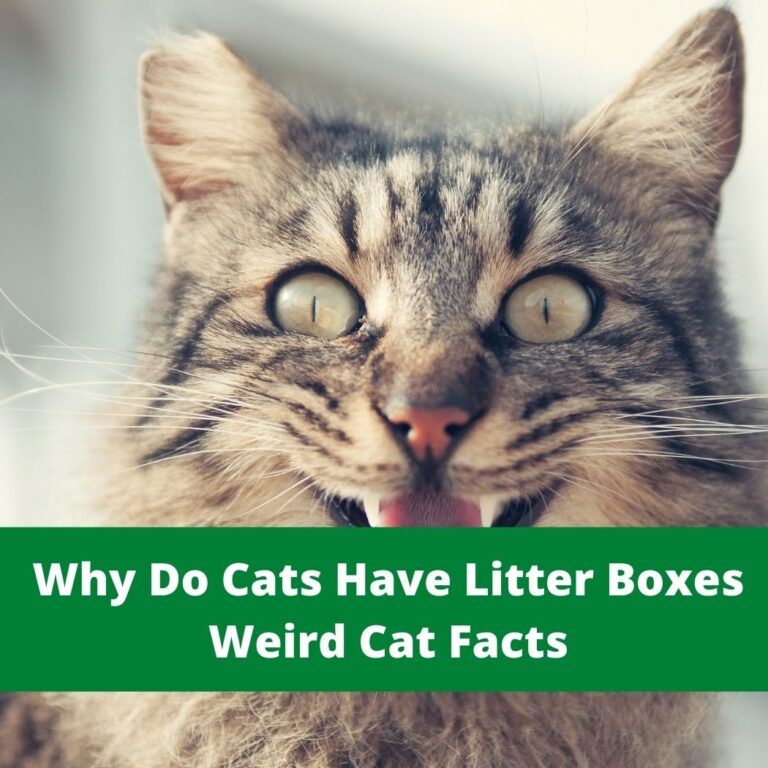 Why Do Cats Have Litter Boxes
