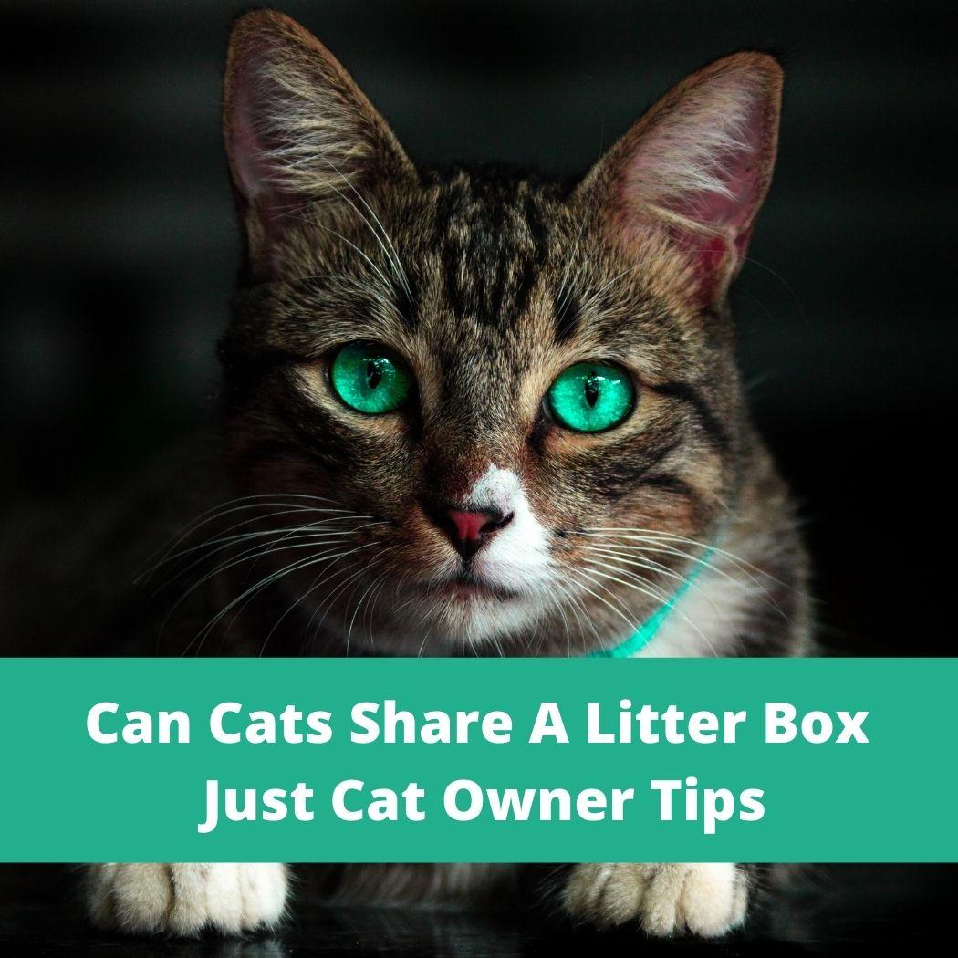 cat cats share the litter box