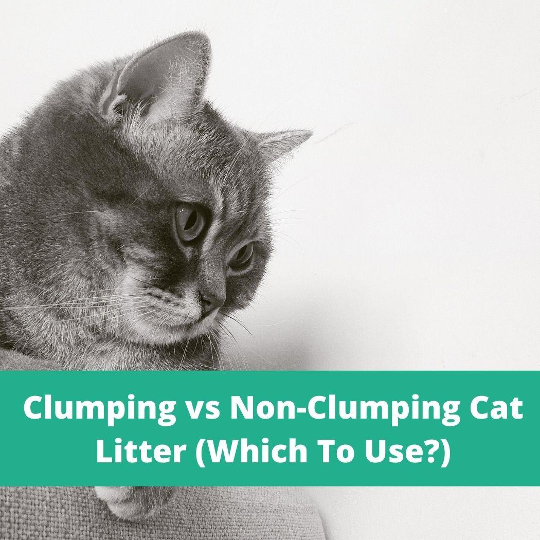 clumping vs non-clumping cat litter