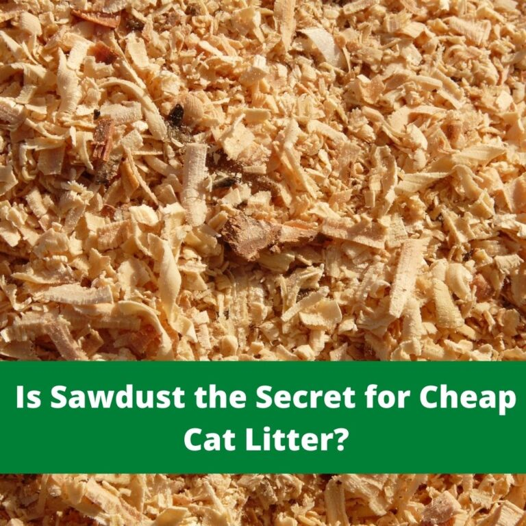 sawdust cat litter review