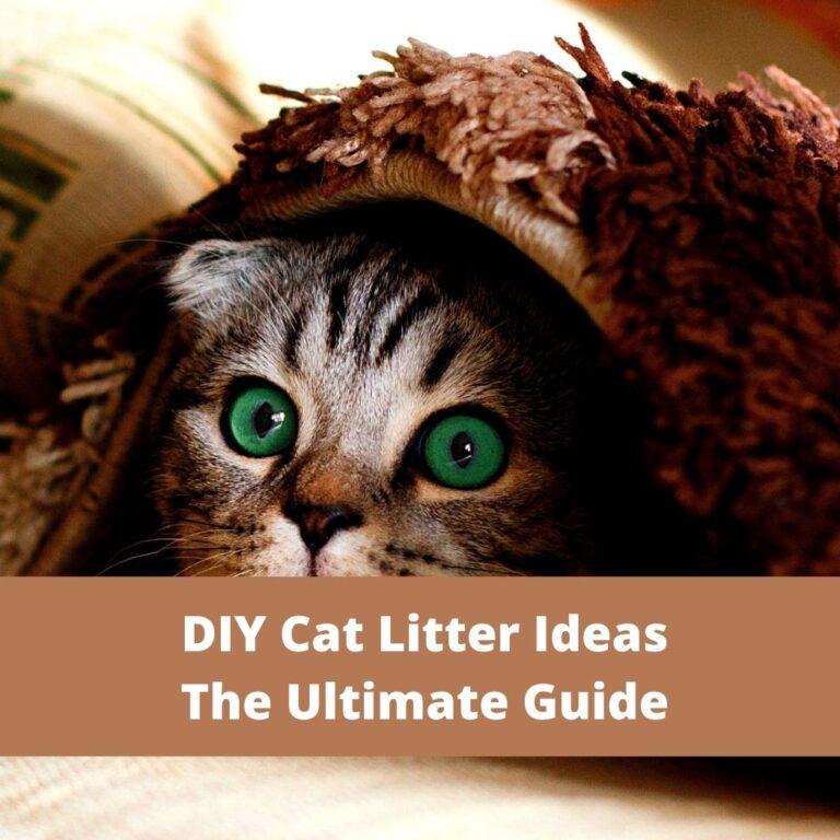 DIY Cat Litter Ideas