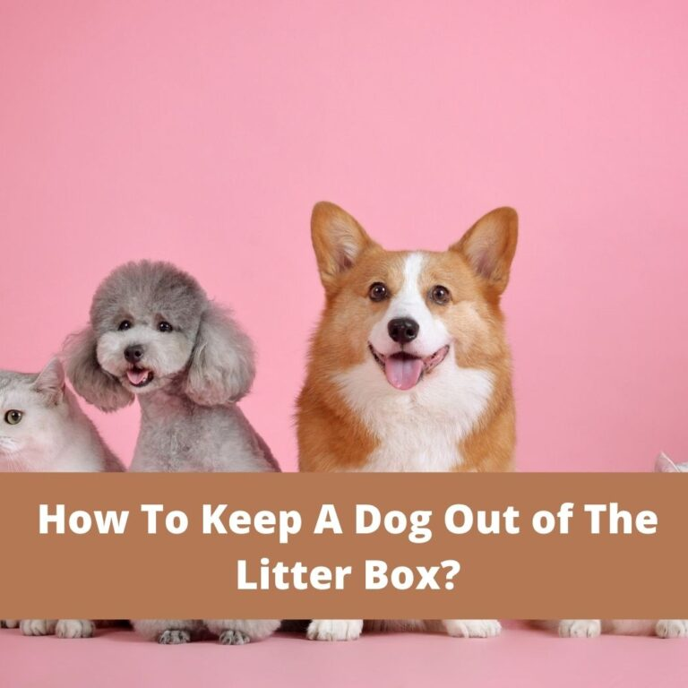 How To Keep A Dog Out of The Litter Box