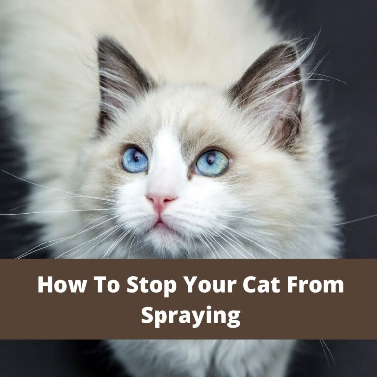 How To Stop Your Cat From Spraying