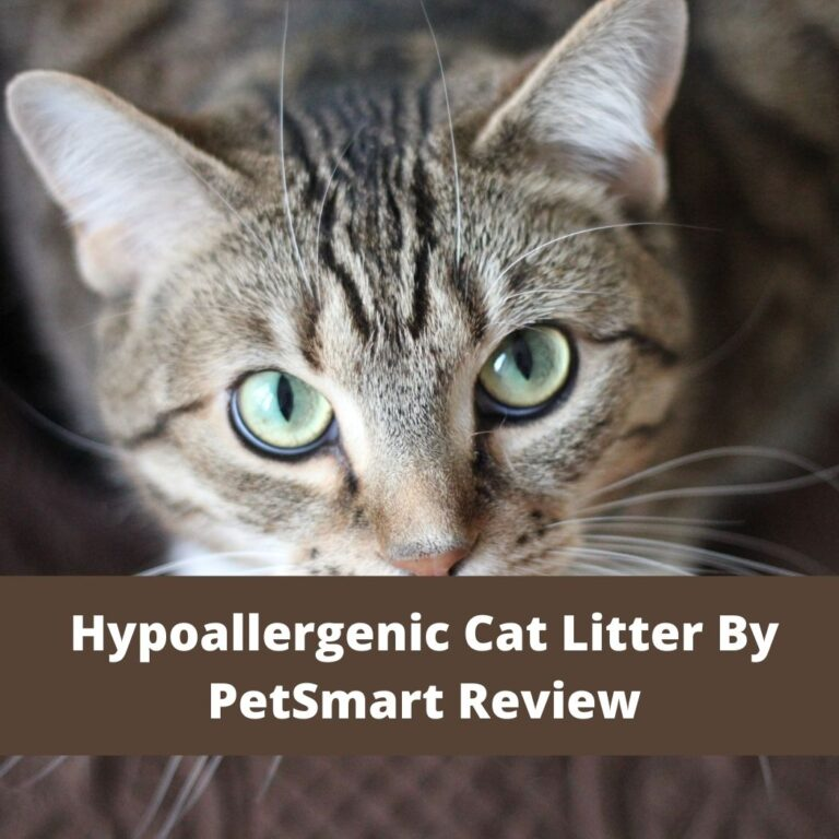 Hypoallergenic Cat Litter By PetSmart Review