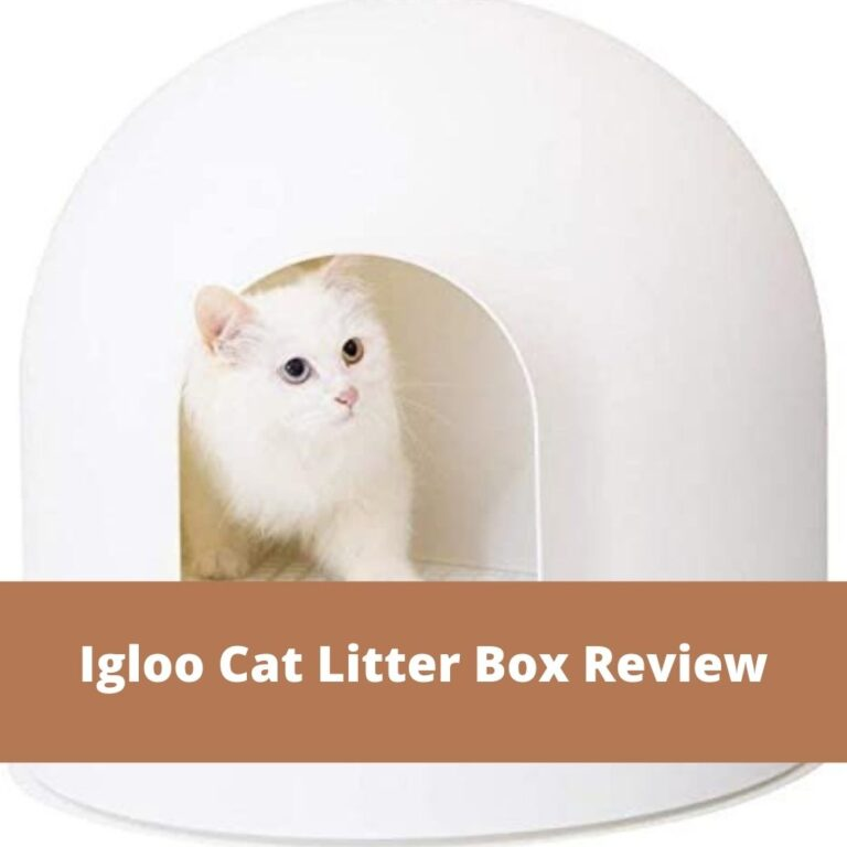 Igloo Cat Litter Box Review