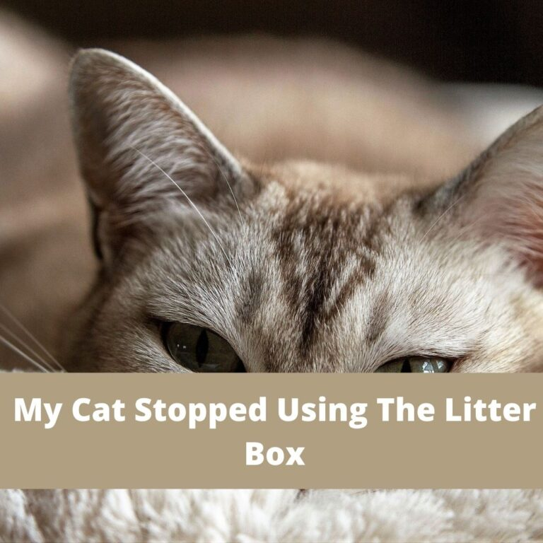 My Cat Stopped Using The Litter Box