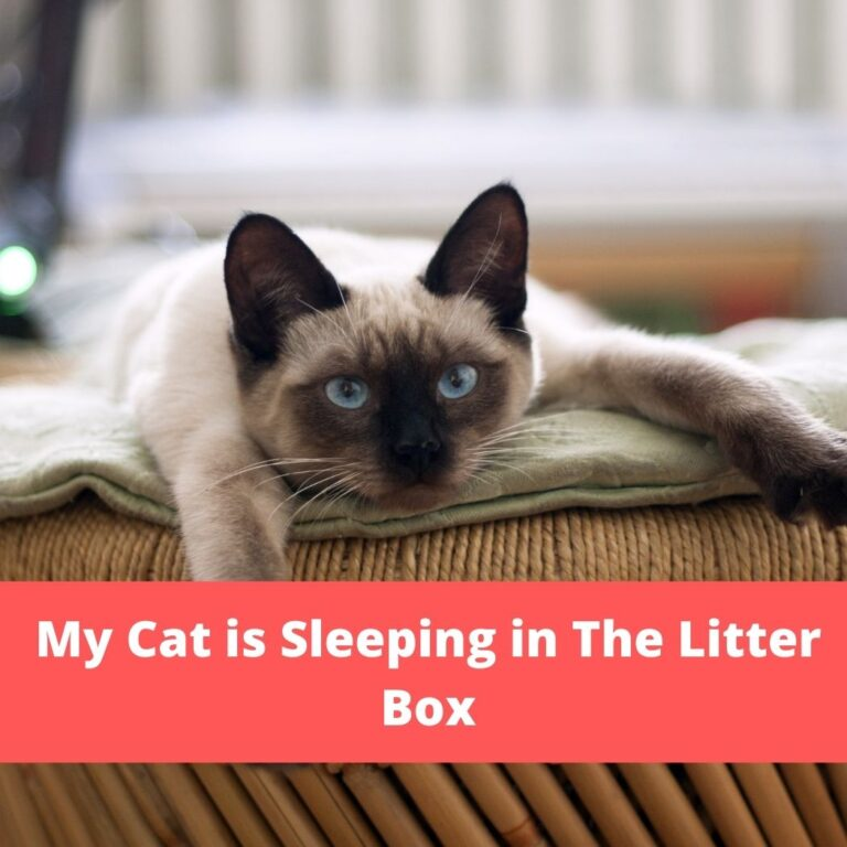 My Cat is Sleeping in The Litter Box